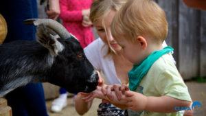 CLAPA 2014 Bocketts Farm with goat